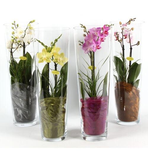 Orchidea Üvegvázában