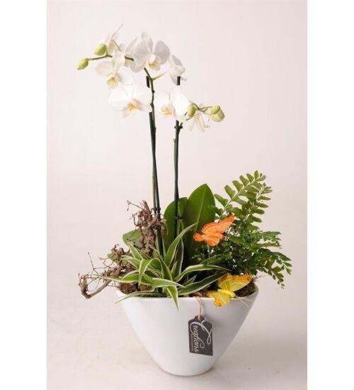 Orchidea Dekoráció