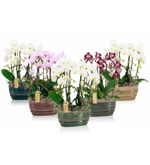 Cascade Orchidea dekoráció