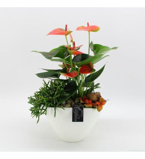 Növénymix Kaspóban