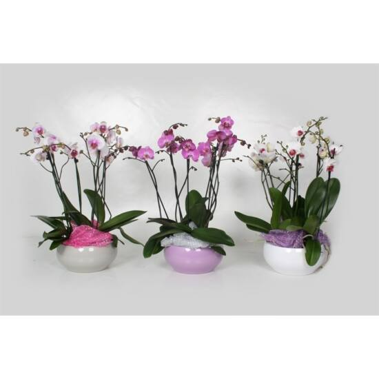 Orchidea Dekoráció  00143
