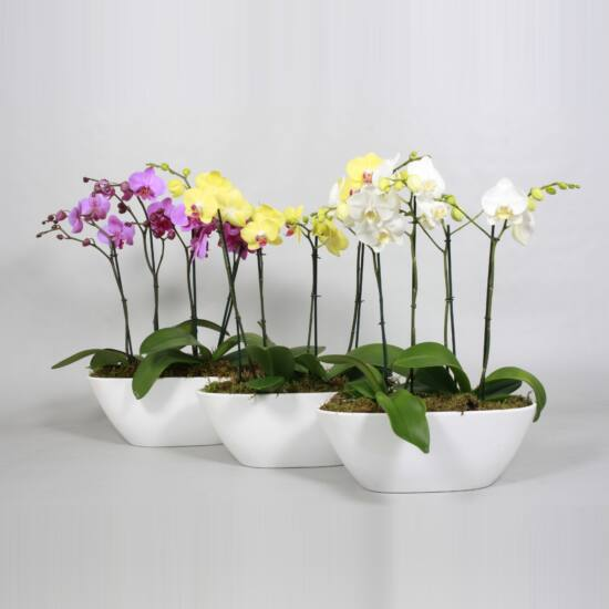 Orchidea Dekoráció  00142