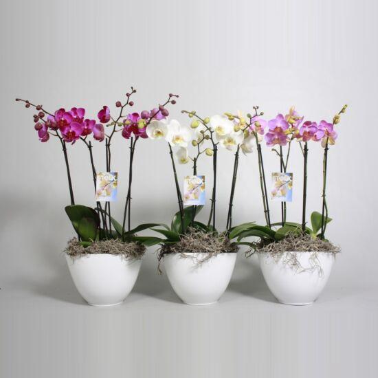 Orchidea Dekoráció  00141