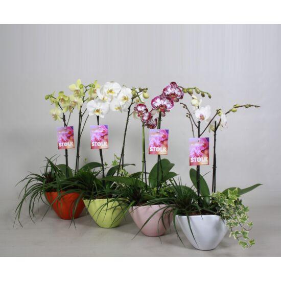 Orchidea Dekoráció 132