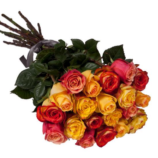 Rózsa Kötegben 116